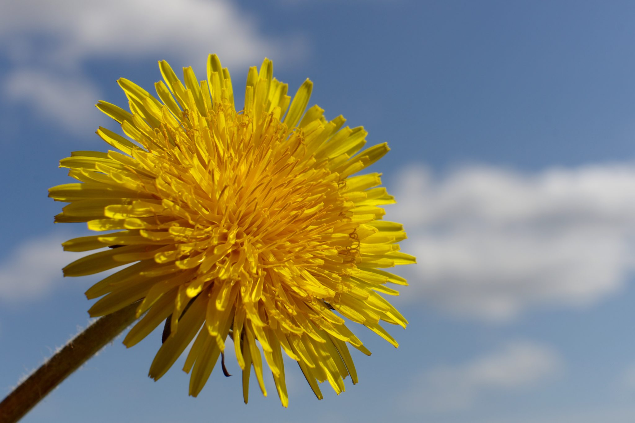 Weeds Happen. What are you doing to prevent them?